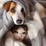 Biatorbágyi állatorvosaink ajánlása, a jelen helyzetre való tekintettel!