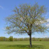 Húszezernél is több fát ültettek tavasszal a 10 millió Fa közösség tagjai
