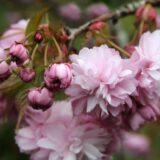 Fokozatosan romlik az idő a hétvégén: vasárnap már nyoma sem lesz a tavasznak