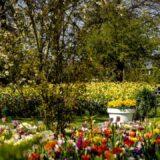 Virágzó ágyásait mutatja be virtuális túrán a világ legnagyobb virágoskertje