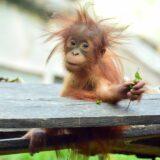 Szerdán nyit az Állatkert – elővigyázatosságból különleges megelőző intézkedések lesznek