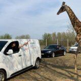Az agglomerációban nyílt meg Magyarország első szafari parkja