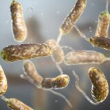 A klímaváltozás miatt újabb fertőzésekre számíthatunk