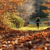 Szeptemberben rendezik meg a Fuss, Forest! terepfutóversenyt a Budakeszi Vadasparkban