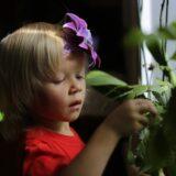Gyerekbarát szobanövények: ezekkel díszítsd a gyerekszobát!