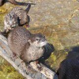 A fővárosi állatkertben januártól félezer mentett állatnak nyújtottak segítséget