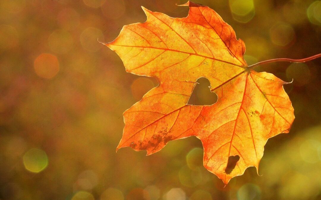 Délután megkezdődik a csillagászati ősz