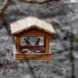 Megkezdődött a madáretetési szezon
