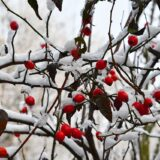 Karácsonykor havas eső, hó is eshet