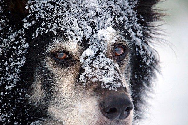Hideg idő – Az állatokra is fokozottan kell figyelni