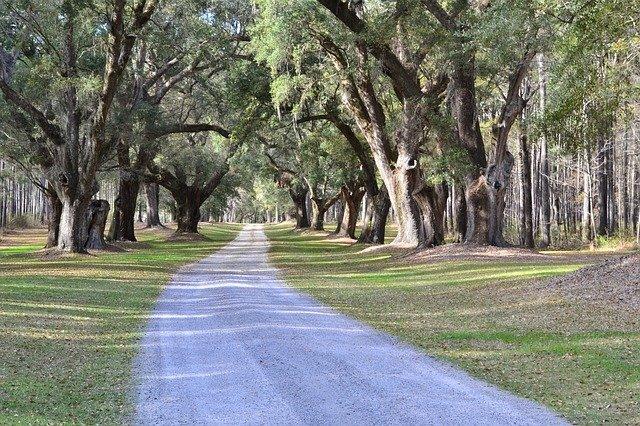 300 fát ültetnek a Forrás sportcentrum területén