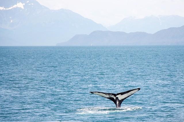 Új bálnafajt azonosítottak a Mexikói-öbölben