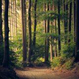 Erdőmegújítás Budakeszin