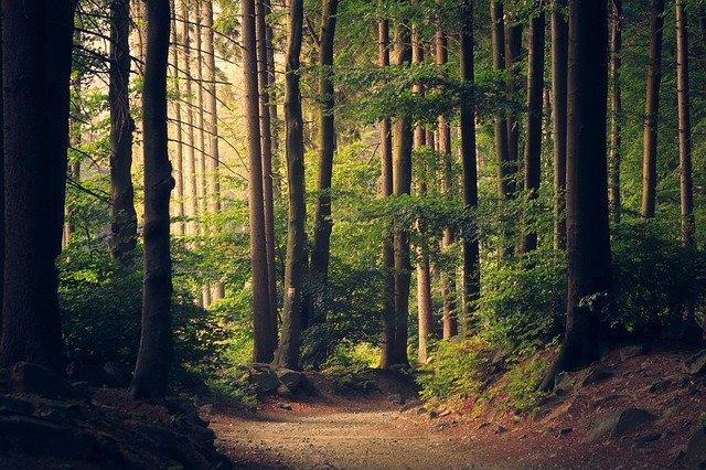 A magyar erdők évente öt millió tonna üvegházhatású gázt kötnek meg