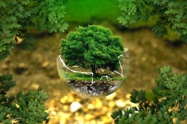 Környezetvédelmi világnap: a teremtett világ megvédése kiemelkedően fontos feladat