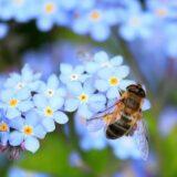 A virágos növények mindössze 7 százalékát érzékeli kéknek az emberi szem