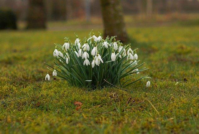 Holnaptól megcsodálhatjuk a hóvirágmezőt!
