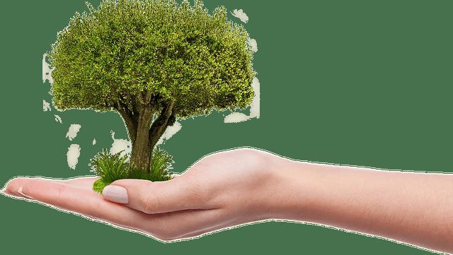 A Föld napja – Már 100 ezer fát ültetett el a 10 millió Fa Alapítvány