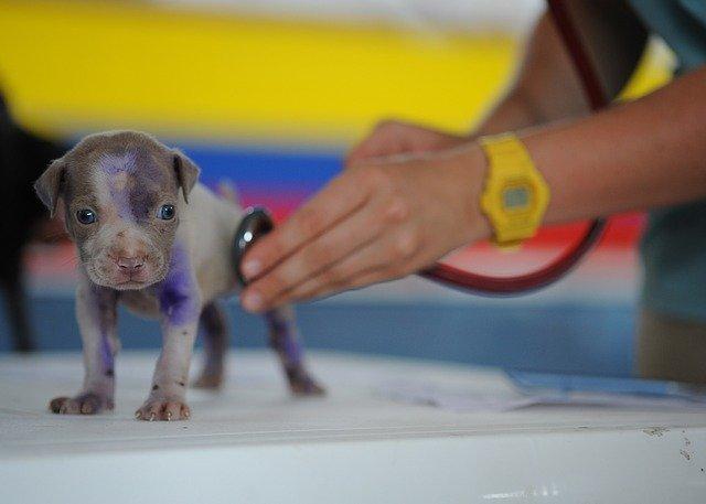Nébih: lejárt a kutyák veszettség elleni oltására adott türelmi idő