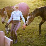 Nyári életmód lovas tábor Biatorbágyon