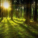 Szentpéteri Sándor: az erdők fontosak a testi és lelki egészség megőrzésében